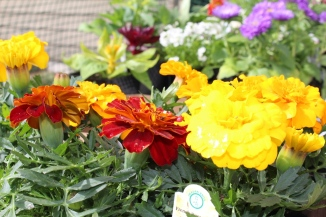 Annual Flowers for Spring  and Summer. Ideas for you flower pots and beds this season. Small Town Girl Blog.