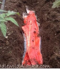 fishfert2-268x500