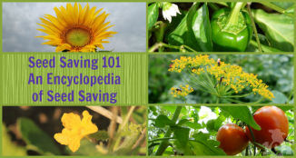 seed_saving1